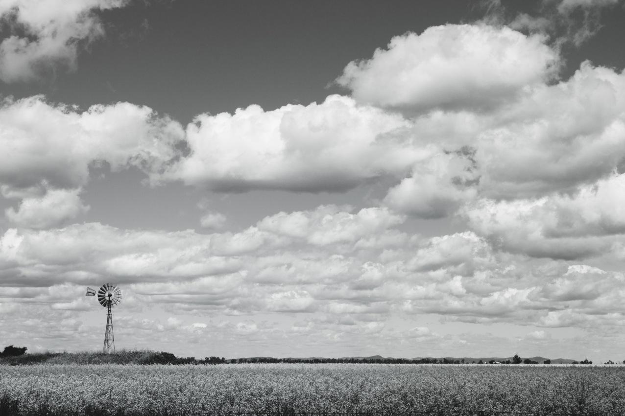 windmill web (1 of 1)